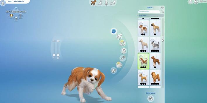 Sims  Forums Cats And Dogs