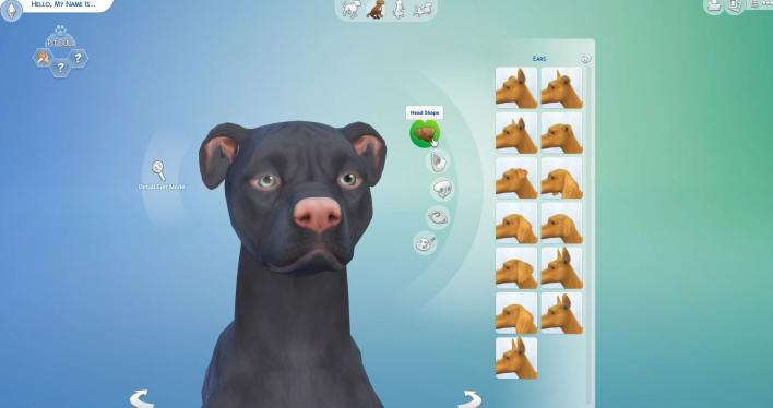 Dog And Cat Sims  Expansion Pack