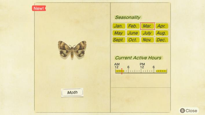 Moth Critterpedia Entry